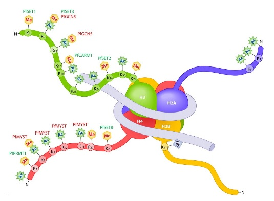 Toolkit for Nucleosome & Histone Research