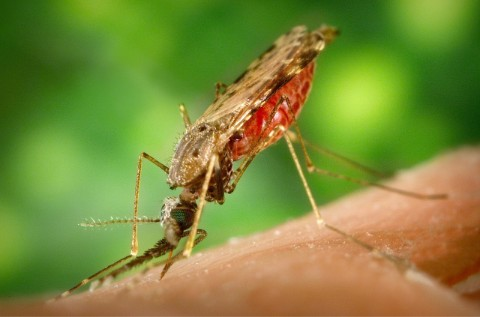 SGS to conduct its first malaria human challenge trial in Belgium