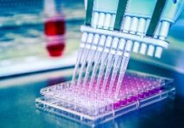 Cell-based Neutralization Assays