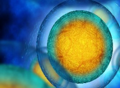 cGMP Cell-based Bioassays
